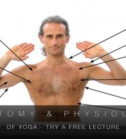 Find out about our Anatomy & Physiology course
