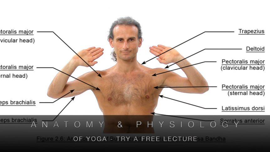 Anatomy & Physiology of Yoga Promo Video